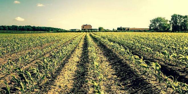 Procaccini. Agroalimentare, a rischio le eccellenze italiane
