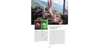 Gli-alberi-del-Giardino-di-Ninfa