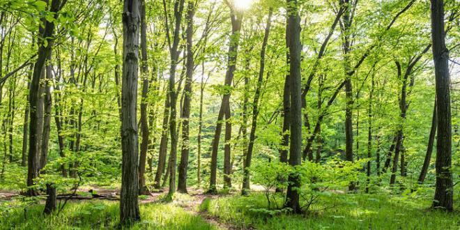 Ambiente. nuovi obiettivi di riduzione CO2 per agricoltura, trasporto, edilizia e rifiuti