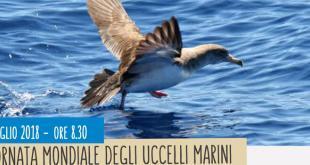 Giornata mondiale degli uccelli marini