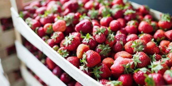 Tutela dei produttori alimentari contro pratiche commerciali sleali