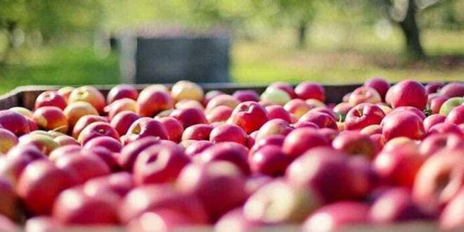 Europa: calo della produzione di mele
