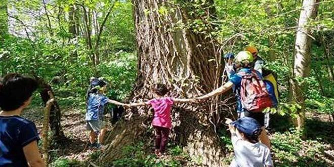 """Aprilia. Nella Tenuta Calissoni Bulgari si celebra la """"giornata nazionale degli alberi"""""""