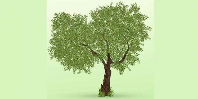 Sabaudia. Festa dell'albero rinviata per maltempo
