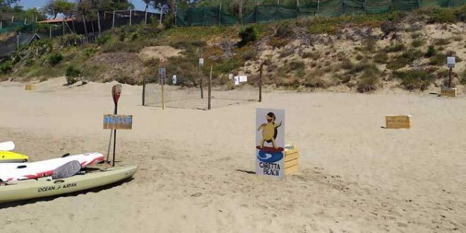 La tartaruga caretta caretta ha scelto la spiaggia di Fondi per deporre le sue uova
